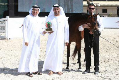 اختتام بطولة أبوظبي الدولية لجمال الخيول العربية اليوم