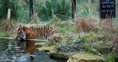 كورونا يوجه ضربة مؤلمة لأقدم حديقة حيوان بالعالم