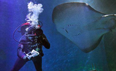 غواص أسترالي يقوم بتصوير كائنات بحرية في ملبورن