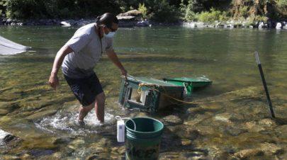 كاليفورنيا تنقذ سمك (السلمون) من الجفاف