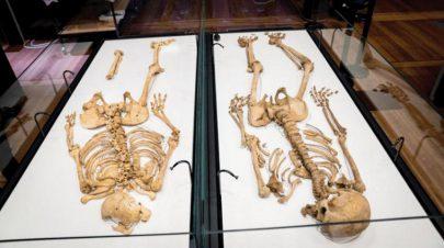 هيكلان عظميان لمحاربين من (الفايكينغ) تربطهما صلة قرابة في متحف الدنمارك