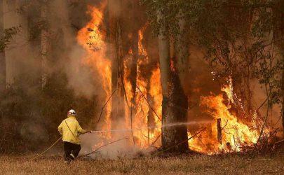 1700 رجل إطفاء يكافحون حرائق غابات في كاليفورنيا