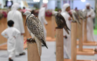 نادي صقاري الإمارات يحتفي بعامه العشرين في معرض أبوظبي الدولي للصيد